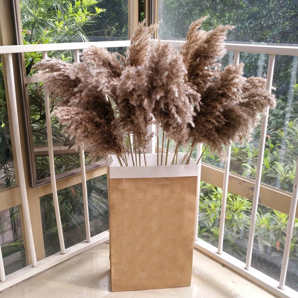 20pcs dried pampas grass natural phragmites&reed flowers&bulrush flowers communis wedding flower bunch