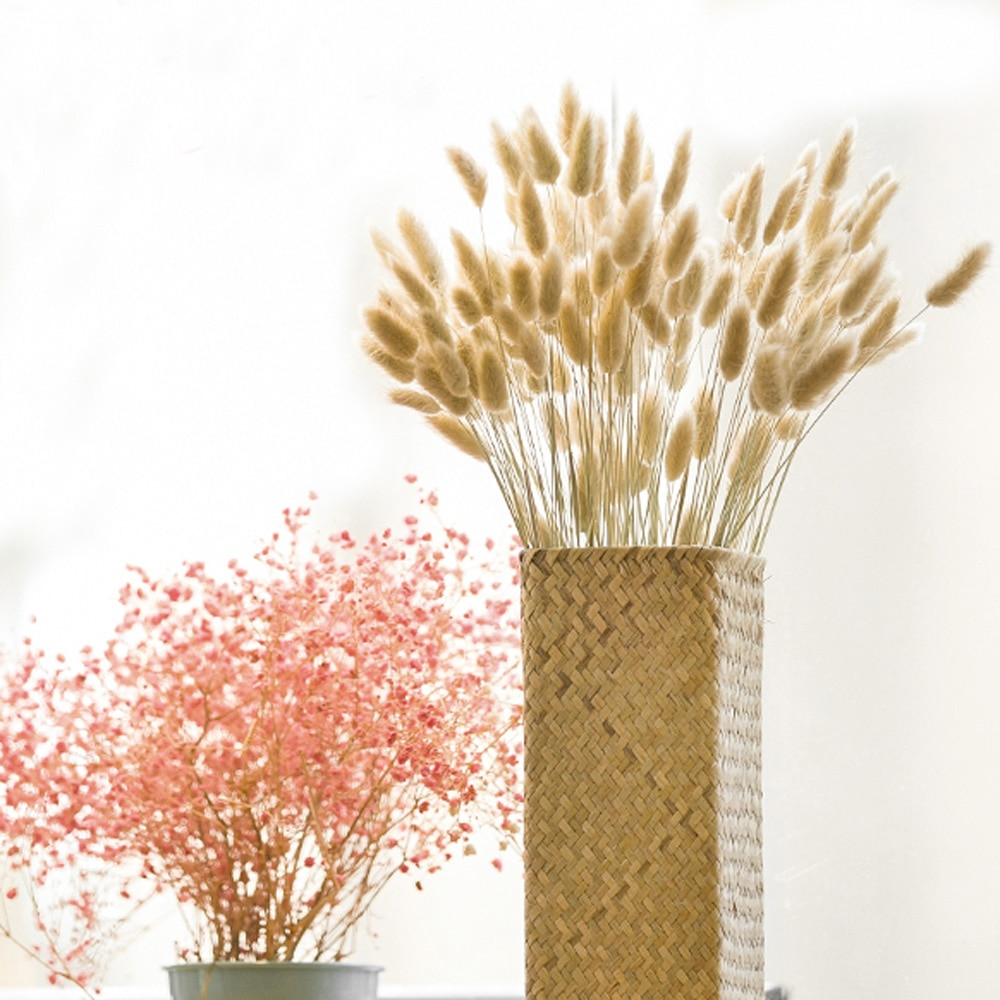 20pcs Dried plants pampas grass natural phragmites communis wedding flower bunch raw color