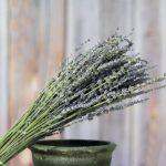 100g light lavender