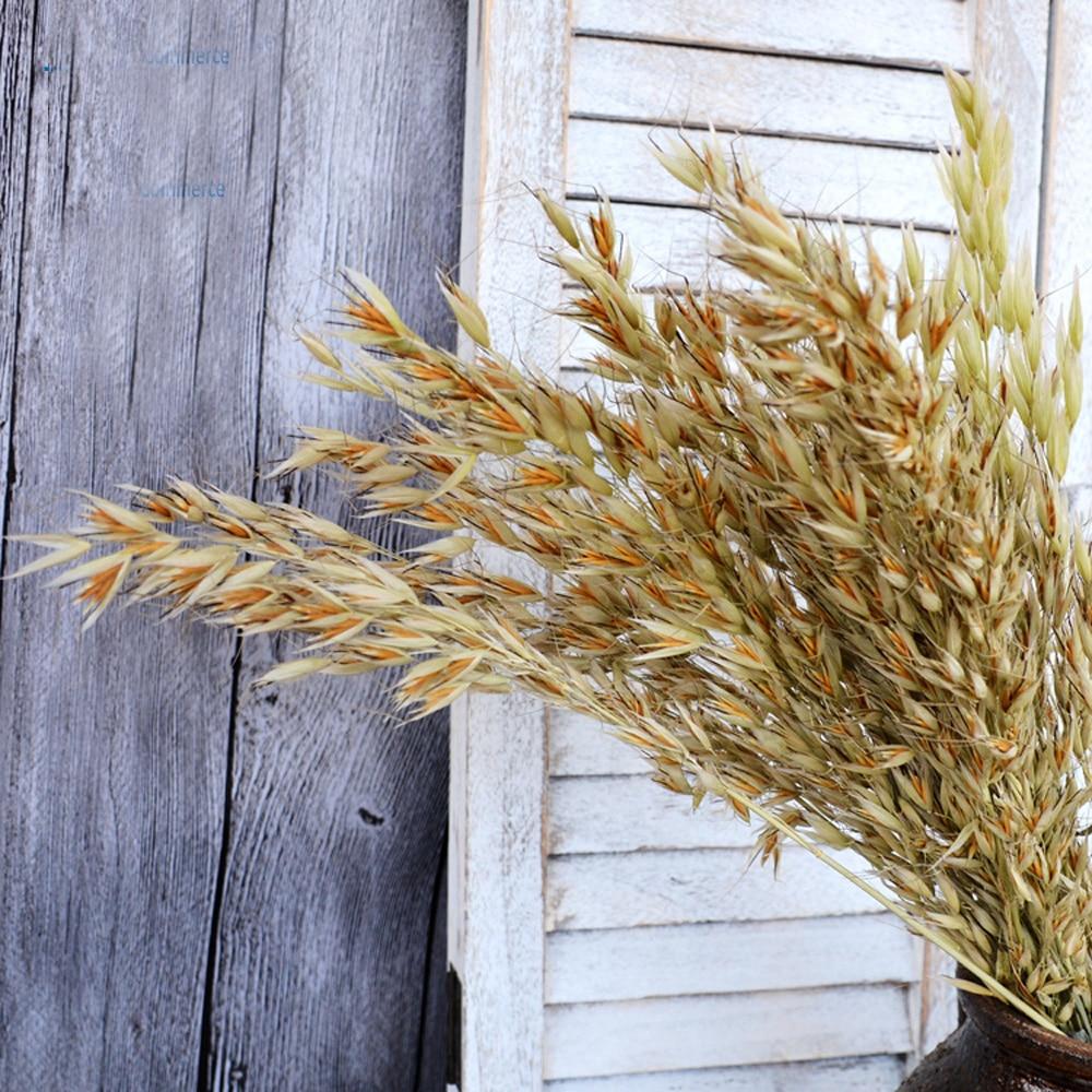50pcs natural color dried natural flower bouquets natural dried ear of oats bouquets oats ear bunches