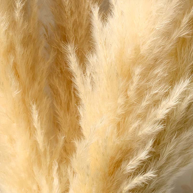 55cm Pampas Grass Decor Extra Large Natural Dried Flowers Bouquet Wedding Flowers Vintage Style for Home Valentine's Day Gift