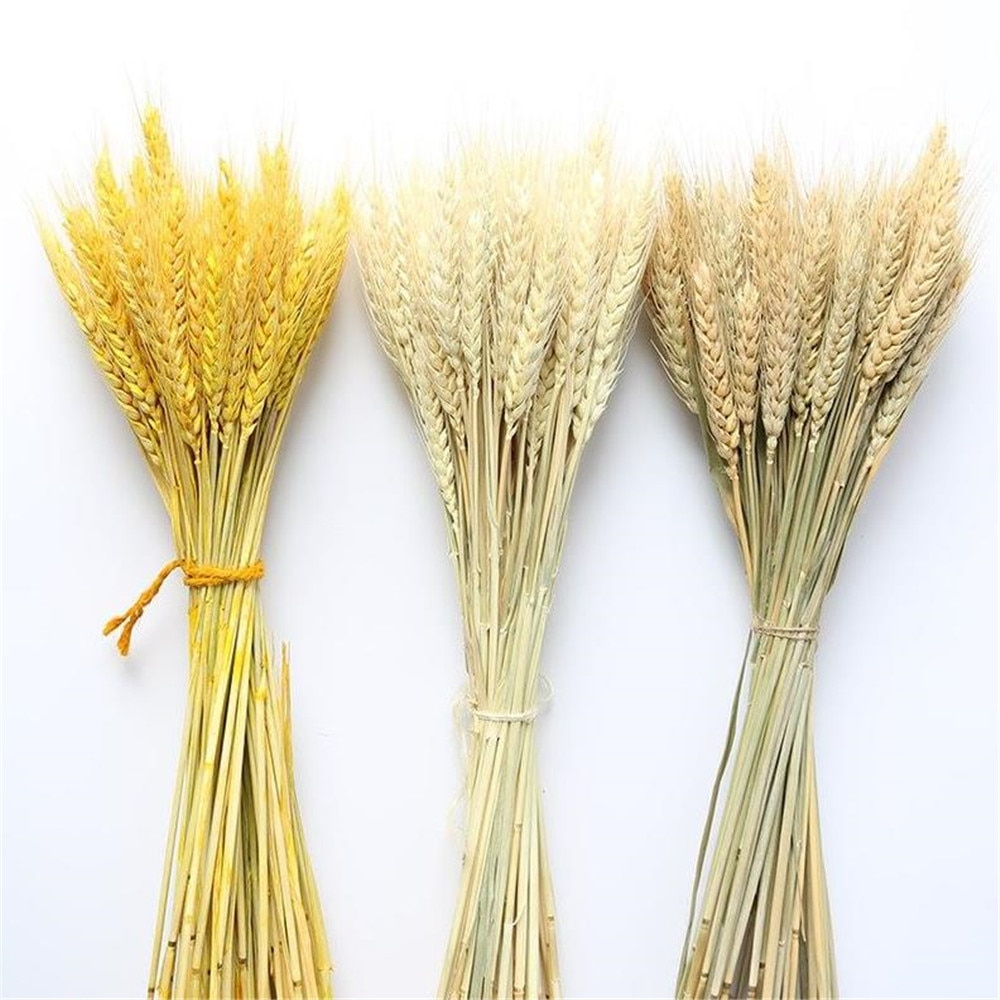 100pc Natural dried wheat ear bunches flower bouquets natural raw color dried ears of wheat bouquets