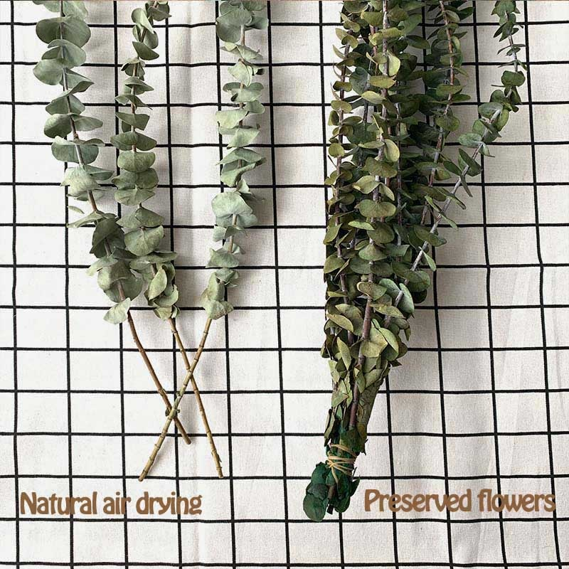 19-22''/10PCS Real Dried Eucalyptus leaves Natural fresh forever preserved flowers BEST Dry eucalyptus branches For home decor