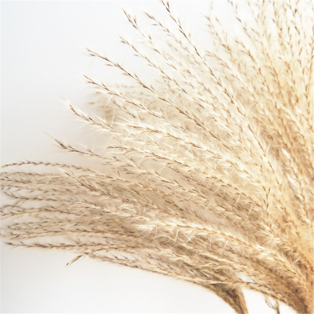 dried pampas grass decor Wedding flowers natural dried flowers bouquets real plants Tall 19-22 '' feather flowers fluffy NEW HOT