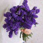 80g dark Purple