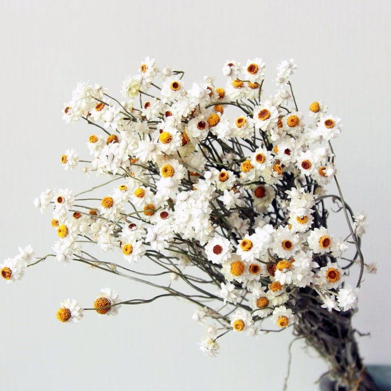 Natural White Dried Flowers Wedding Decoration Pampas Grass For Party DIY Craft Scrapbook Bouquet New Products Free Shipping