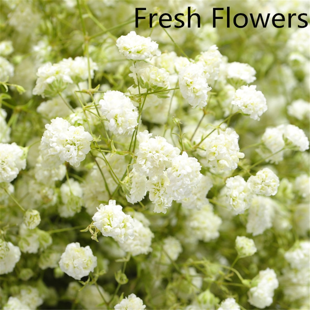 Natural dried baby breath flowers bouquets real touch flowers for wedding decor White