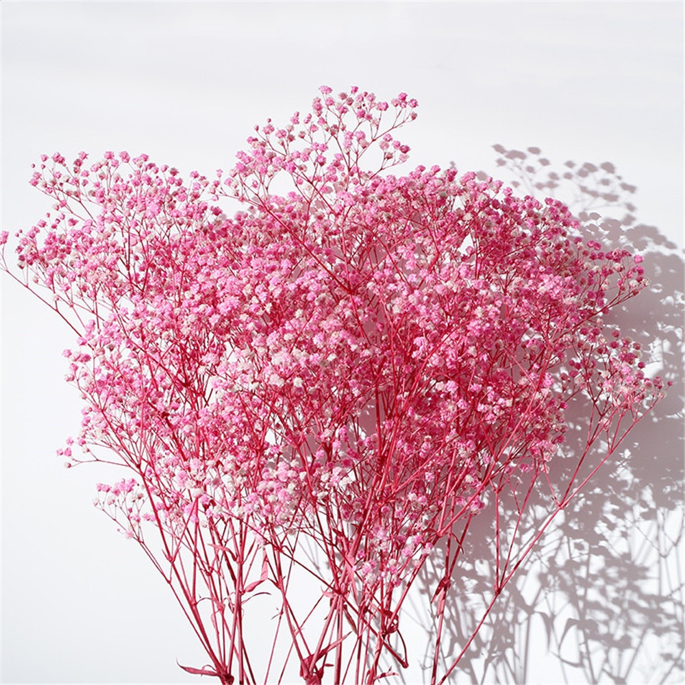 Gypsophila flowers real natural babysbreath bouquet flower for home table decoration wedding bouquets Light Pink